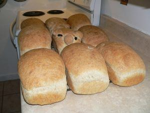 A batch of nine loaves of basic home-baked white bread sitting on the counter in rows of three. The loaf in the middle is piggy shaped, with raisin eyes.